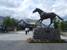 the-curragh.jpg